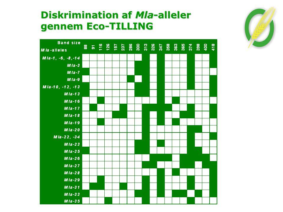 Diskrimination af Mla-alleler gennem Eco-TILLING