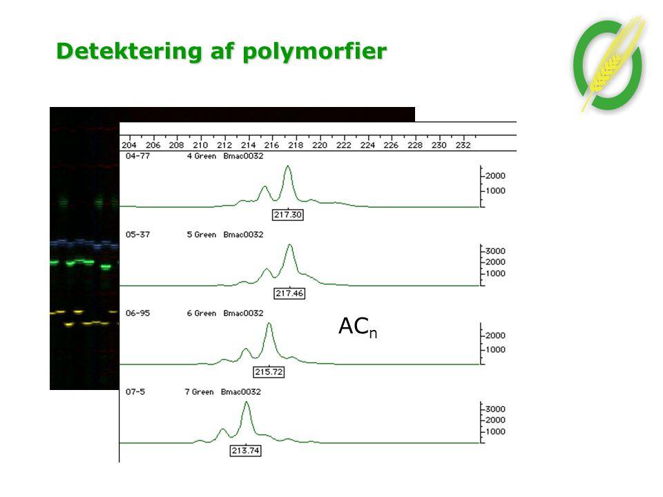 Detektering af polymorfier AC n