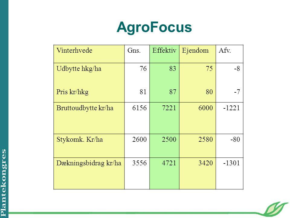 AgroFocus VinterhvedeGns.EffektivEjendomAfv.