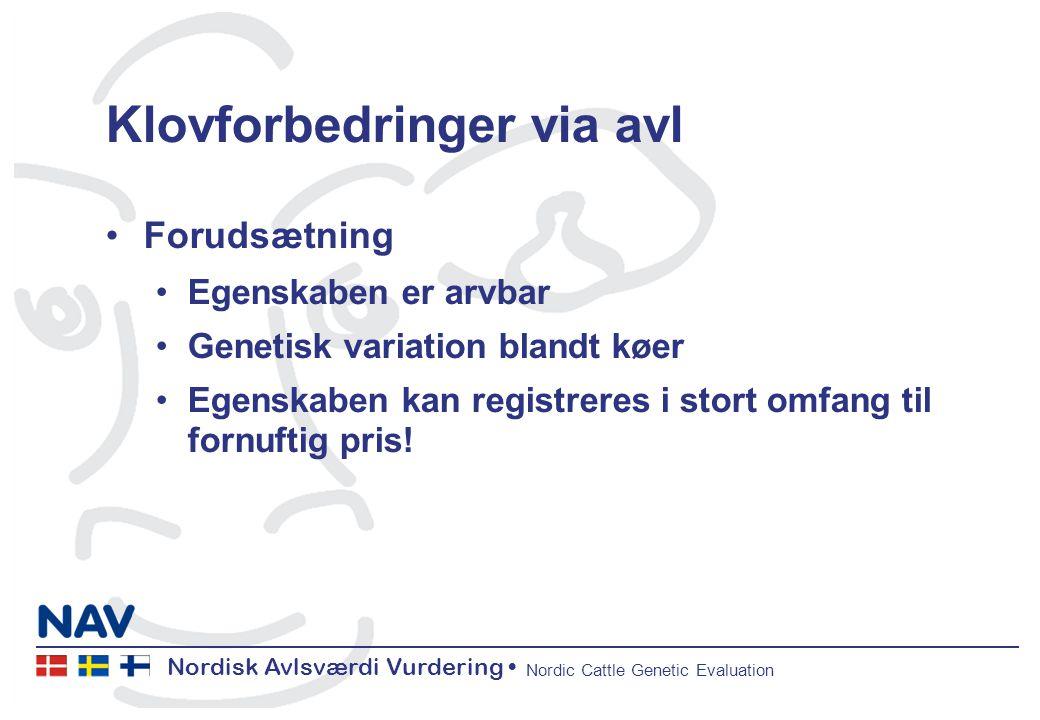 Nordisk Avlsværdi Vurdering Nordic Cattle Genetic Evaluation Klovforbedringer via avl Forudsætning Egenskaben er arvbar Genetisk variation blandt køer Egenskaben kan registreres i stort omfang til fornuftig pris!