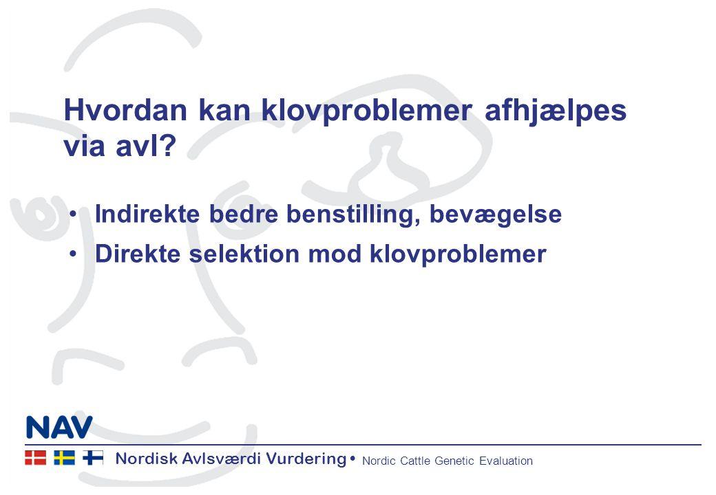 Nordisk Avlsværdi Vurdering Nordic Cattle Genetic Evaluation Hvordan kan klovproblemer afhjælpes via avl.