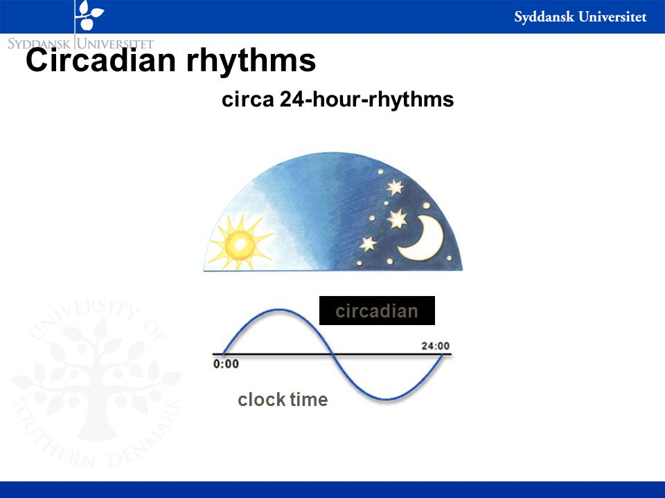 Circadian rhythms clock time circadian circa 24-hour-rhythms