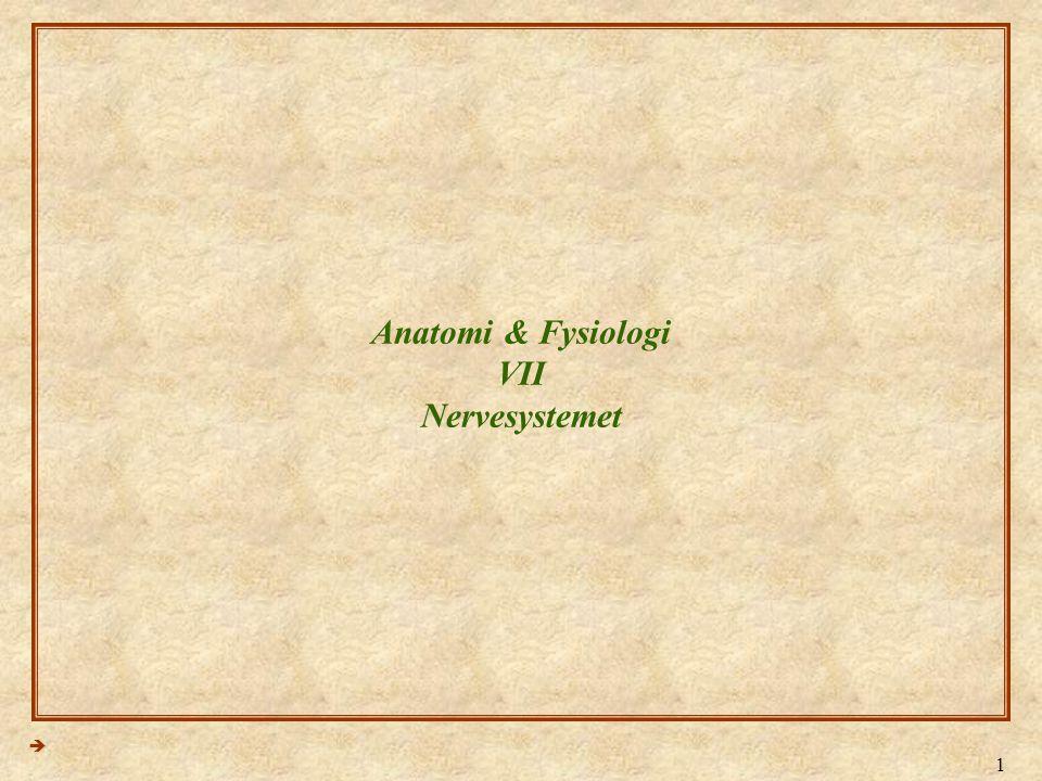1 Anatomi & Fysiologi VII Nervesystemet 
