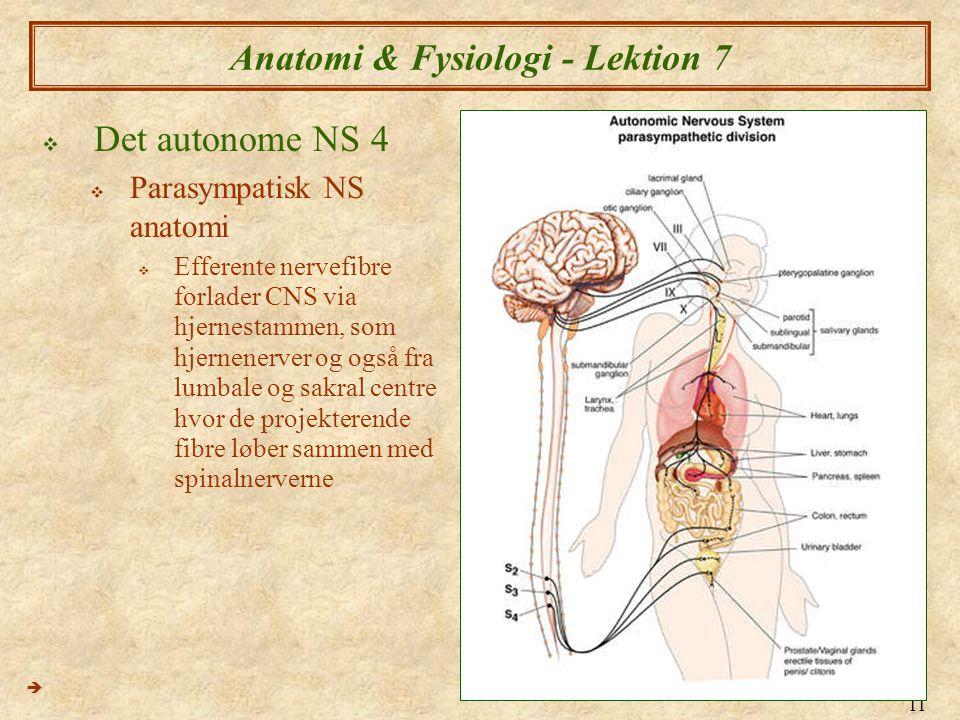 11 Anatomi & Fysiologi - Lektion 7  Det autonome NS 4  Parasympatisk NS anatomi  Efferente nervefibre forlader CNS via hjernestammen, som hjernener