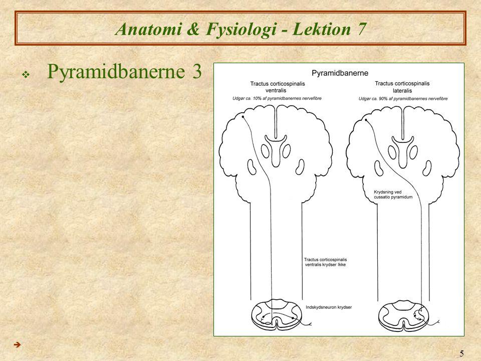 6 Anatomi & Fysiologi - Lektion 7  Afferente (sensoriske) baner 1 