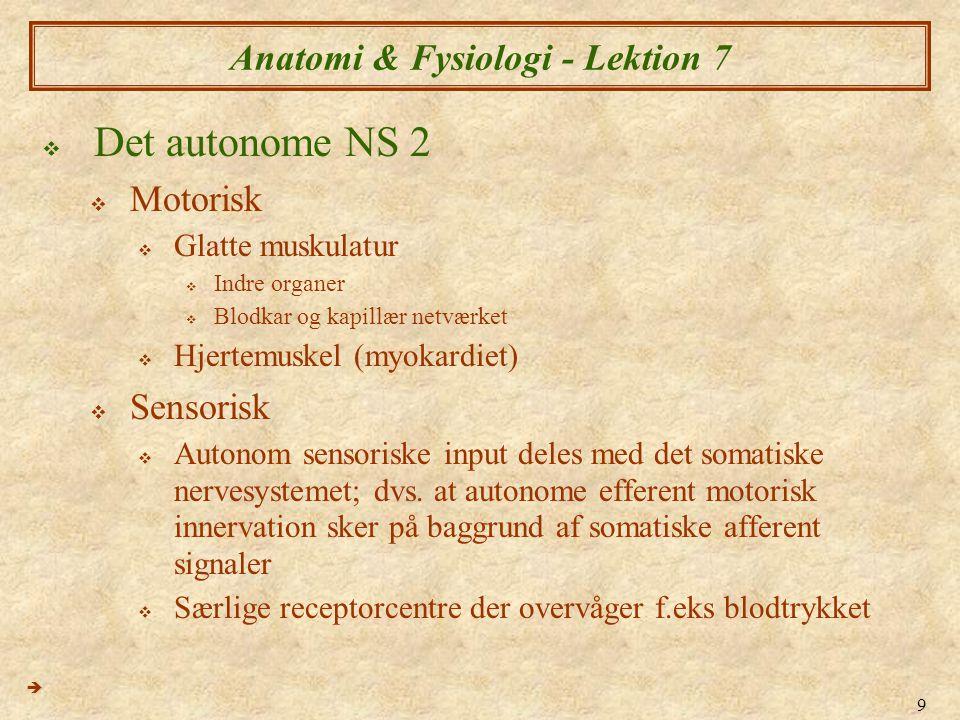 9 Anatomi & Fysiologi - Lektion 7  Det autonome NS 2  Motorisk  Glatte muskulatur  Indre organer  Blodkar og kapillær netværket  Hjertemuskel (m