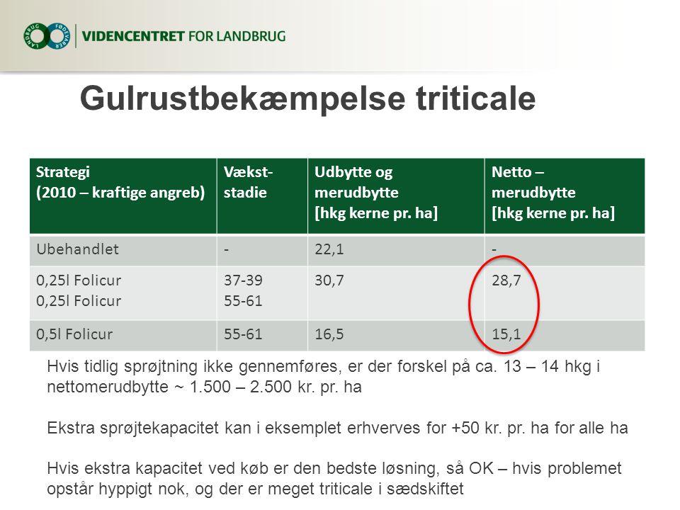 Gulrustbekæmpelse triticale Strategi (2010 – kraftige angreb) Vækst- stadie Udbytte og merudbytte [hkg kerne pr.