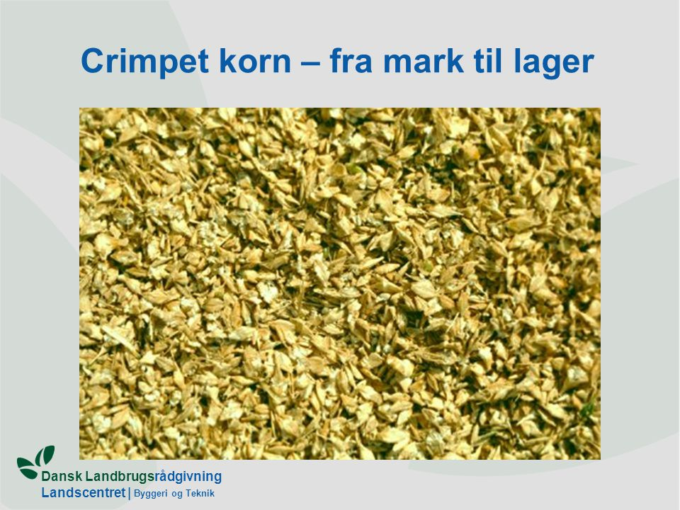 Dansk Landbrugsrådgivning Landscentret | Byggeri og Teknik Crimpet korn – fra mark til lager