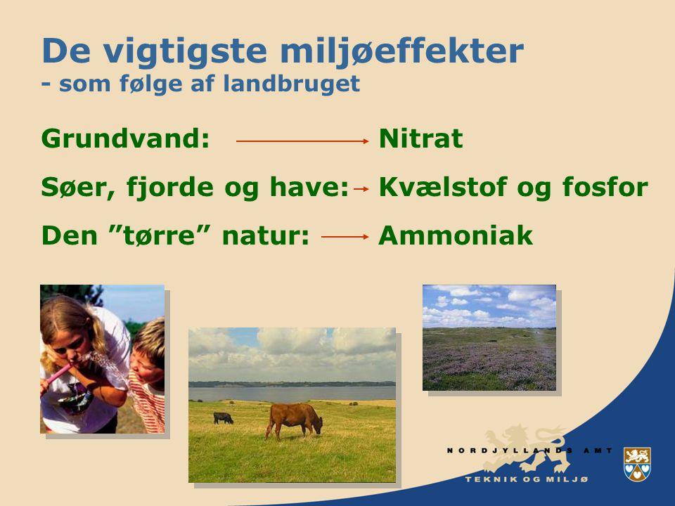 De vigtigste miljøeffekter - som følge af landbruget Grundvand:Nitrat Søer, fjorde og have:Kvælstof og fosfor Den tørre natur:Ammoniak