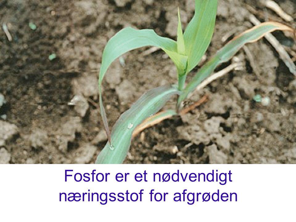 NuværendeFremtidige N-reduktion Planteavlsbrug19 kg N/ha-39 kg N/ha Svinebrug54 kg N/ha-53 kg N/ha Kvælstofbalance ved reduktion af normer på yderligere 20 pct.