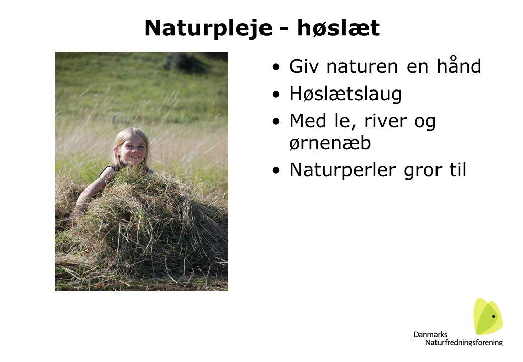 Naturpleje - høslæt Giv naturen en hånd Høslætslaug Med le, river og ørnenæb Naturperler gror til
