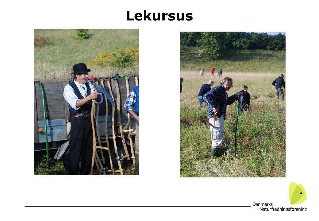 Lekursus