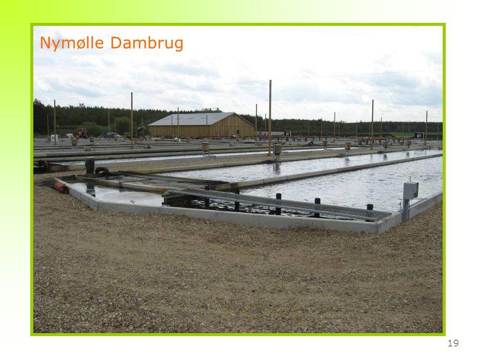 19 Nymølle Dambrug