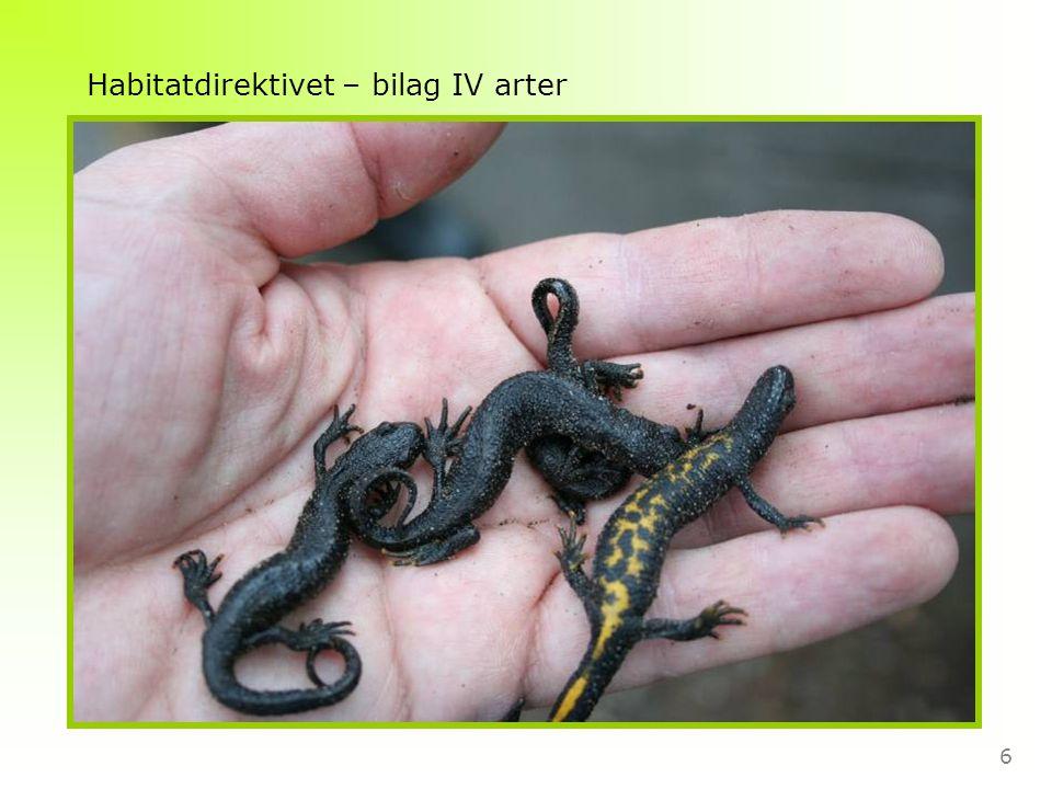 6 Habitatdirektivet – bilag IV arter