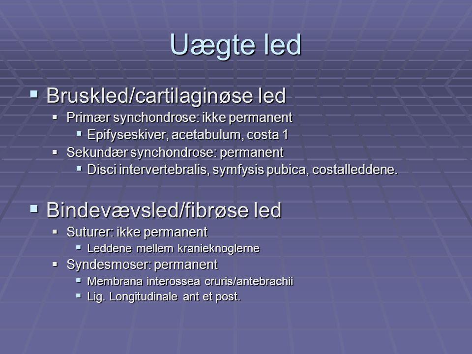 Uægte led  Bruskled/cartilaginøse led  Primær synchondrose: ikke permanent  Epifyseskiver, acetabulum, costa 1  Sekundær synchondrose: permanent  Disci intervertebralis, symfysis pubica, costalleddene.
