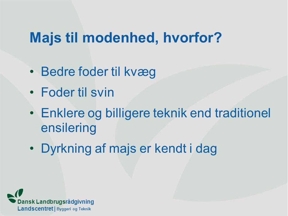 Dansk Landbrugsrådgivning Landscentret   Byggeri og Teknik Majs til modenhed, hvorfor.