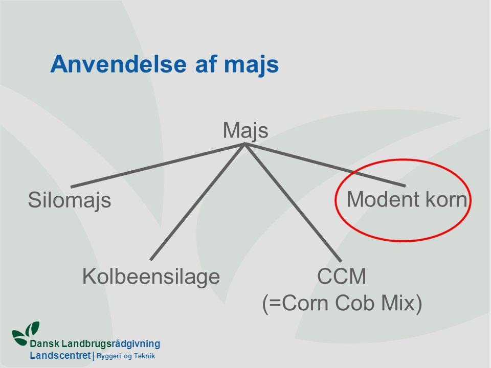 Dansk Landbrugsrådgivning Landscentret   Byggeri og Teknik Anvendelse af majs Majs Silomajs KolbeensilageCCM (=Corn Cob Mix) Modent korn
