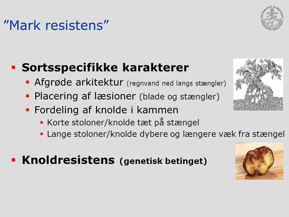 Mark resistens  Sortsspecifikke karakterer  Afgrøde arkitektur (regnvand ned langs stængler)  Placering af læsioner (blade og stængler)  Fordeling af knolde i kammen  Korte stoloner/knolde tæt på stængel  Lange stoloner/knolde dybere og længere væk fra stængel  Knoldresistens (genetisk betinget)