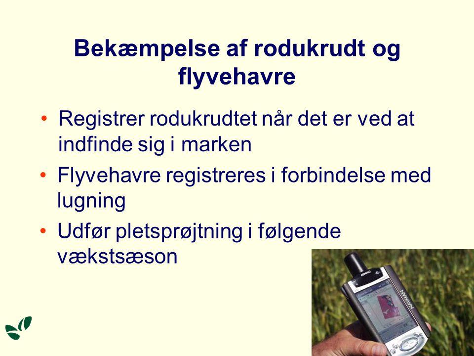 Bekæmpelse af rodukrudt og flyvehavre Registrer rodukrudtet når det er ved at indfinde sig i marken Flyvehavre registreres i forbindelse med lugning Udfør pletsprøjtning i følgende vækstsæson