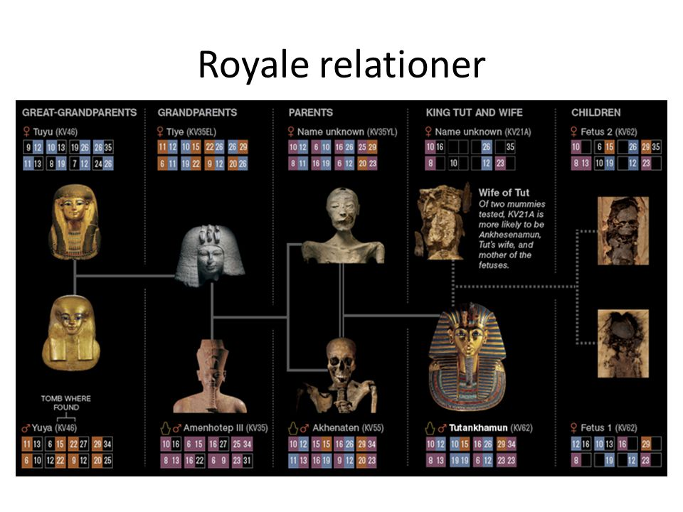 Royale relationer