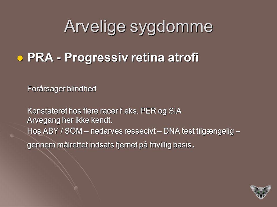 Arvelige sygdomme PRA - Progressiv retina atrofi PRA - Progressiv retina atrofi Forårsager blindhed Konstateret hos flere racer f.eks.
