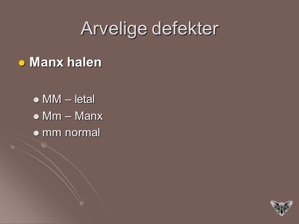 Arvelige defekter Manx halen Manx halen MM – letal MM – letal Mm – Manx Mm – Manx mm normal mm normal