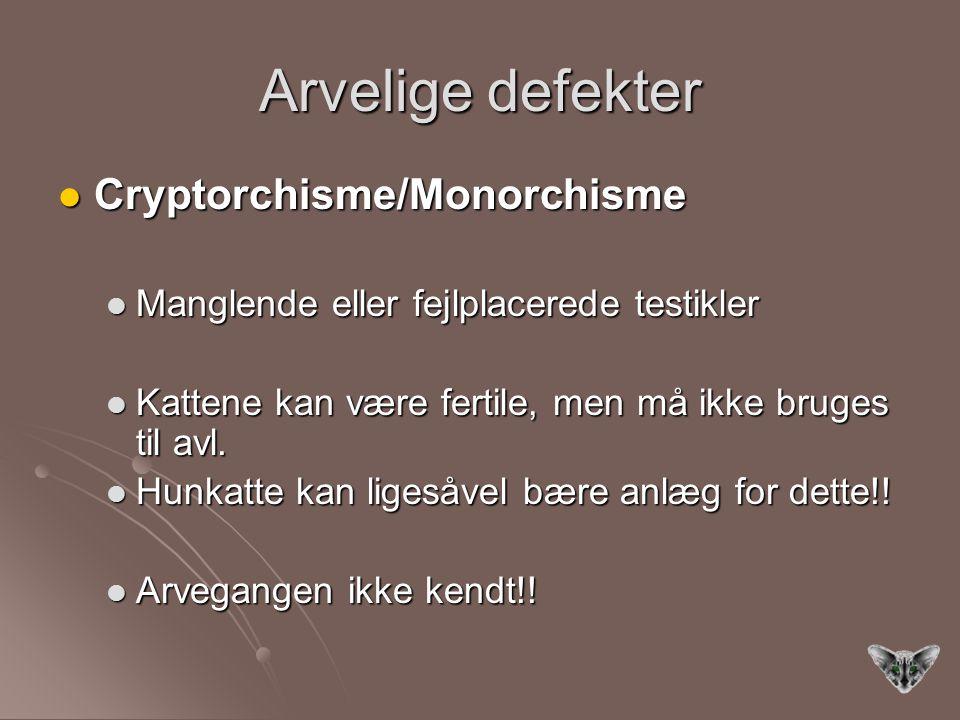 Arvelige defekter Cryptorchisme/Monorchisme Cryptorchisme/Monorchisme Manglende eller fejlplacerede testikler Manglende eller fejlplacerede testikler Kattene kan være fertile, men må ikke bruges til avl.