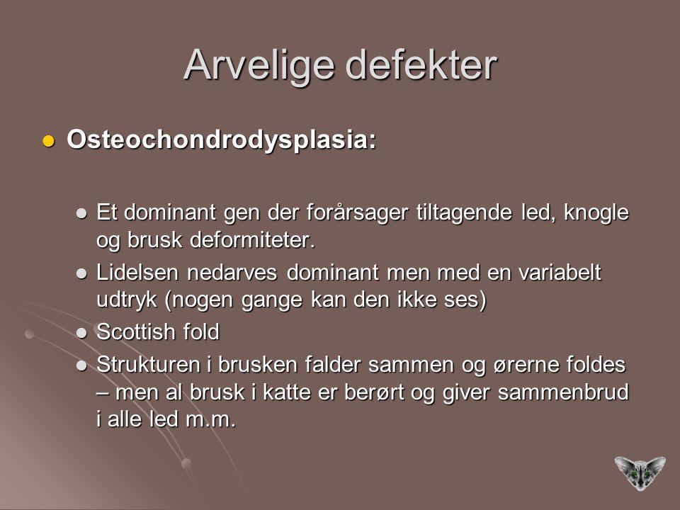 Arvelige defekter Osteochondrodysplasia: Osteochondrodysplasia: Et dominant gen der forårsager tiltagende led, knogle og brusk deformiteter.