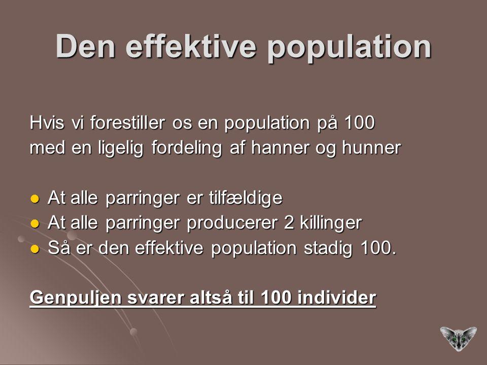 Den effektive population Hvis vi forestiller os en population på 100 med en ligelig fordeling af hanner og hunner At alle parringer er tilfældige At alle parringer er tilfældige At alle parringer producerer 2 killinger At alle parringer producerer 2 killinger Så er den effektive population stadig 100.