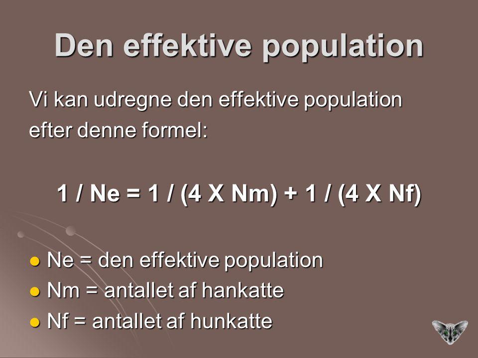 Den effektive population Vi kan udregne den effektive population efter denne formel: 1 / Ne = 1 / (4 X Nm) + 1 / (4 X Nf) Ne = den effektive population Ne = den effektive population Nm = antallet af hankatte Nm = antallet af hankatte Nf = antallet af hunkatte Nf = antallet af hunkatte