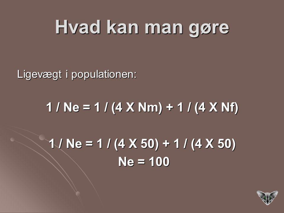 Hvad kan man gøre Ligevægt i populationen: 1 / Ne = 1 / (4 X Nm) + 1 / (4 X Nf) 1 / Ne = 1 / (4 X 50) + 1 / (4 X 50) Ne = 100 Ne = 100