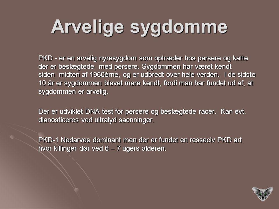 Arvelige sygdomme PKD - er en arvelig nyresygdom som optræder hos persere og katte der er beslægtede med persere.