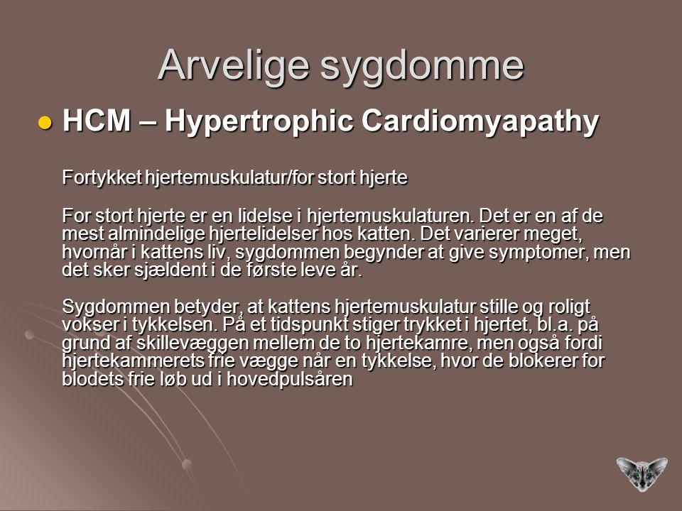 Arvelige sygdomme HCM – Hypertrophic Cardiomyapathy HCM – Hypertrophic Cardiomyapathy Fortykket hjertemuskulatur/for stort hjerte For stort hjerte er en lidelse i hjertemuskulaturen.