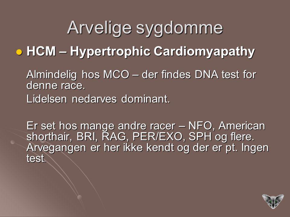 Arvelige sygdomme HCM – Hypertrophic Cardiomyapathy HCM – Hypertrophic Cardiomyapathy Almindelig hos MCO – der findes DNA test for denne race.