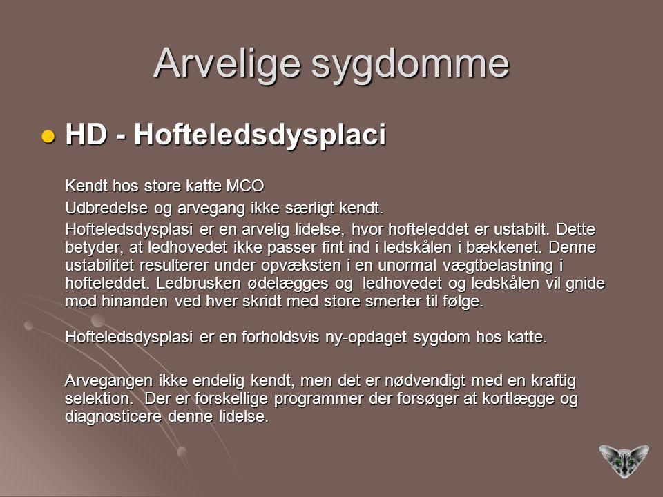 Arvelige sygdomme HD - Hofteledsdysplaci HD - Hofteledsdysplaci Kendt hos store katte MCO Udbredelse og arvegang ikke særligt kendt.