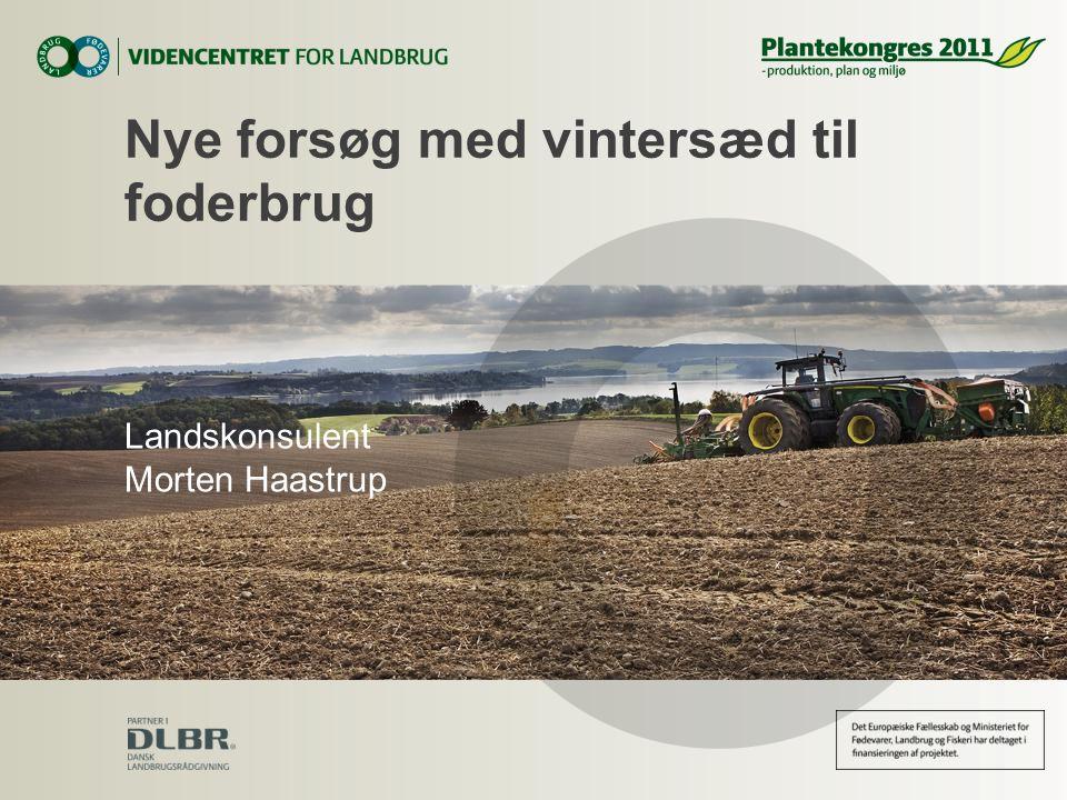 Nye forsøg med vintersæd til foderbrug Landskonsulent Morten Haastrup