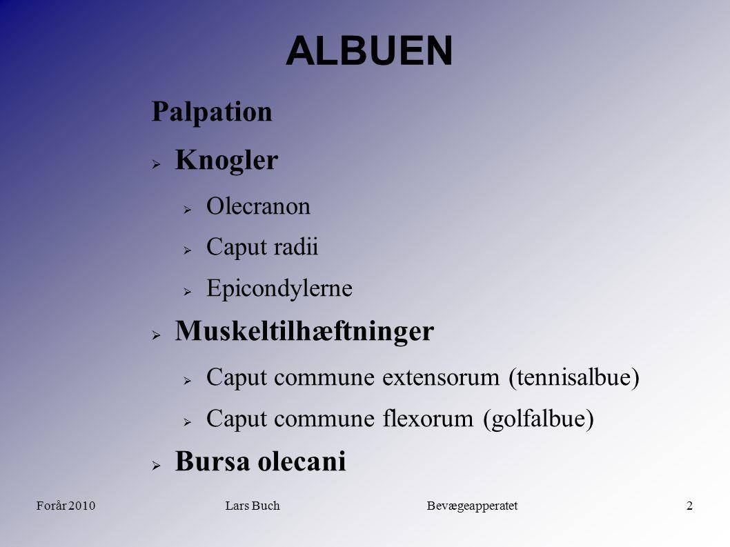 Forår 2010Lars Buch Bevægeapperatet2 ALBUEN Palpation  Knogler  Olecranon  Caput radii  Epicondylerne  Muskeltilhæftninger  Caput commune extens