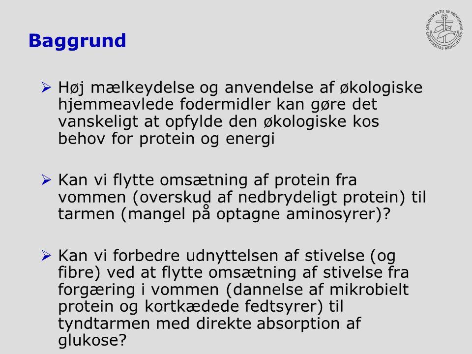 Baggrund  Høj mælkeydelse og anvendelse af økologiske hjemmeavlede fodermidler kan gøre det vanskeligt at opfylde den økologiske kos behov for protein og energi  Kan vi flytte omsætning af protein fra vommen (overskud af nedbrydeligt protein) til tarmen (mangel på optagne aminosyrer).