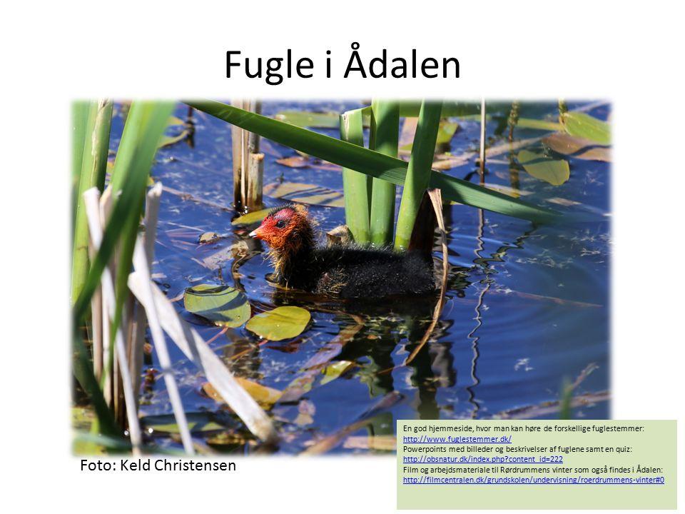 Fugle i Ådalen En god hjemmeside, hvor man kan høre de forskellige fuglestemmer: http://www.fuglestemmer.dk/ http://www.fuglestemmer.dk/ Powerpoints m