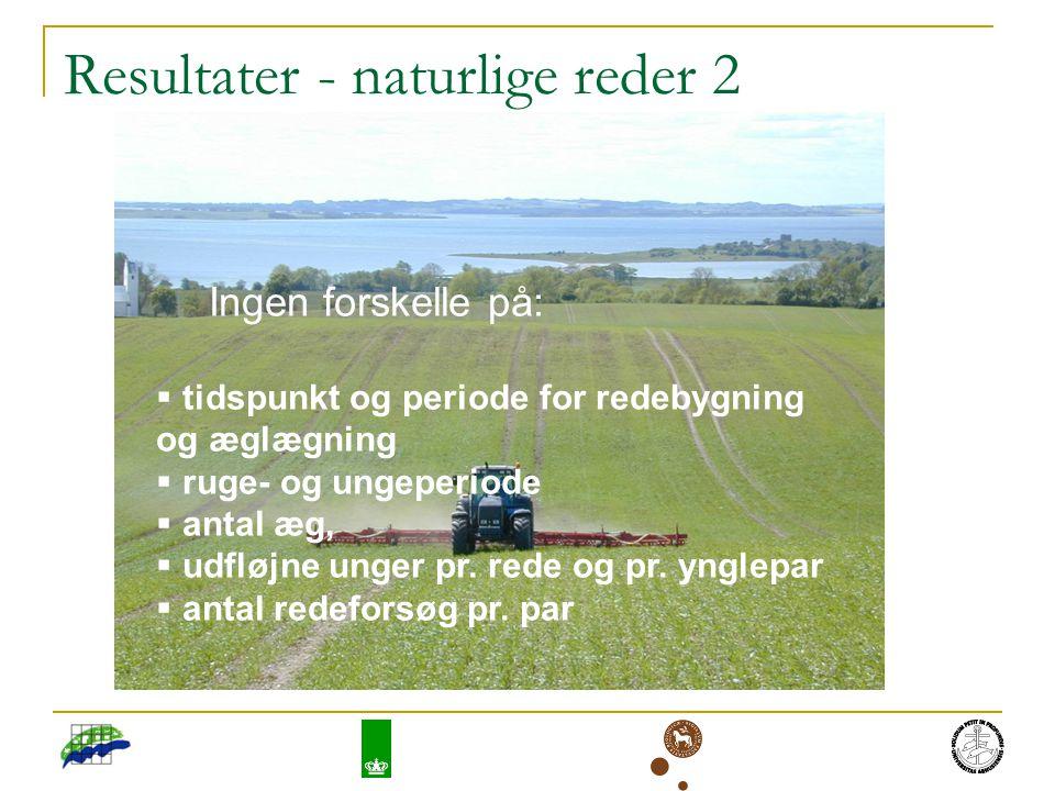 Resultater - naturlige reder 2 Ingen forskelle på:  tidspunkt og periode for redebygning og æglægning  ruge- og ungeperiode  antal æg,  udfløjne unger pr.