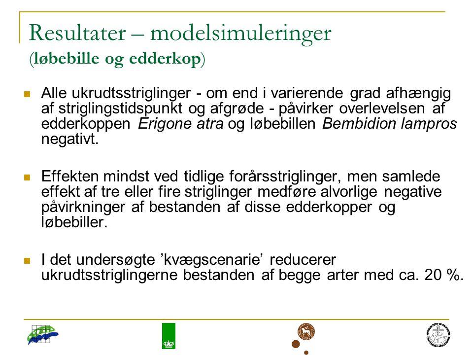 Resultater – modelsimuleringer (løbebille og edderkop) Alle ukrudtsstriglinger - om end i varierende grad afhængig af striglingstidspunkt og afgrøde - påvirker overlevelsen af edderkoppen Erigone atra og løbebillen Bembidion lampros negativt.