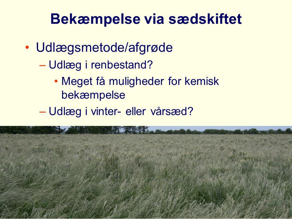 Bekæmpelse via sædskiftet Udlægsmetode/afgrøde –Udlæg i renbestand.