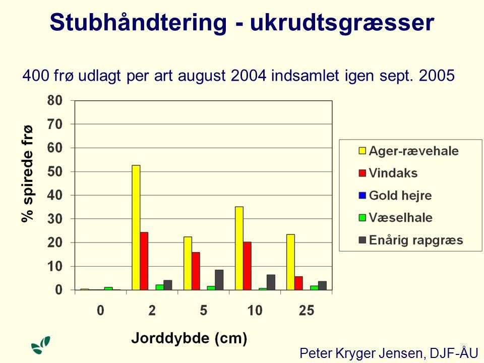 Stubhåndtering - ukrudtsgræsser 400 frø udlagt per art august 2004 indsamlet igen sept.