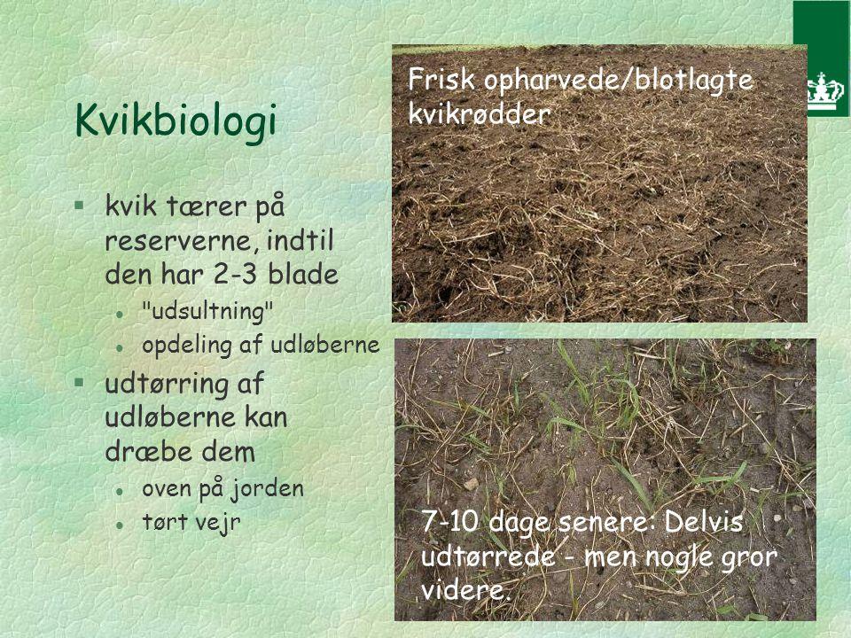 Kvikbiologi §kvik tærer på reserverne, indtil den har 2-3 blade l udsultning l opdeling af udløberne §udtørring af udløberne kan dræbe dem l oven på jorden l tørt vejr 7-10 dage senere: Delvis udtørrede - men nogle gror videre.