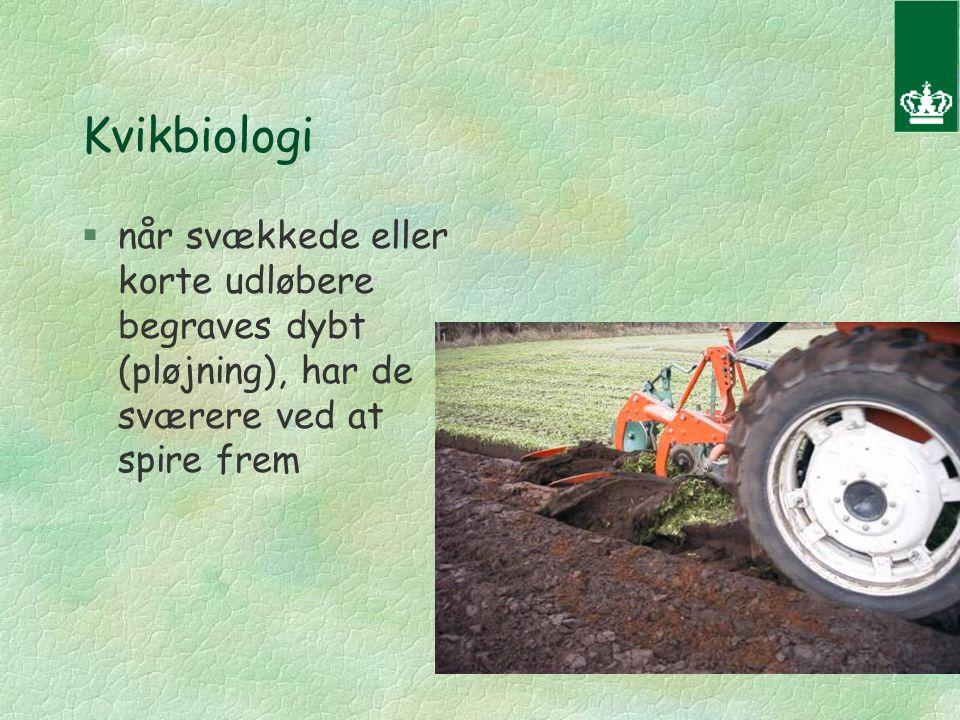 Kvikbiologi §når svækkede eller korte udløbere begraves dybt (pløjning), har de sværere ved at spire frem