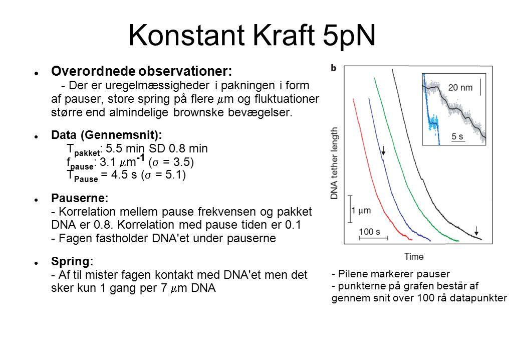 Konstant Kraft 5pN Overordnede observationer: - Der er uregelmæssigheder i pakningen i form af pauser, store spring på flere  m og fluktuationer større end almindelige brownske bevægelser.