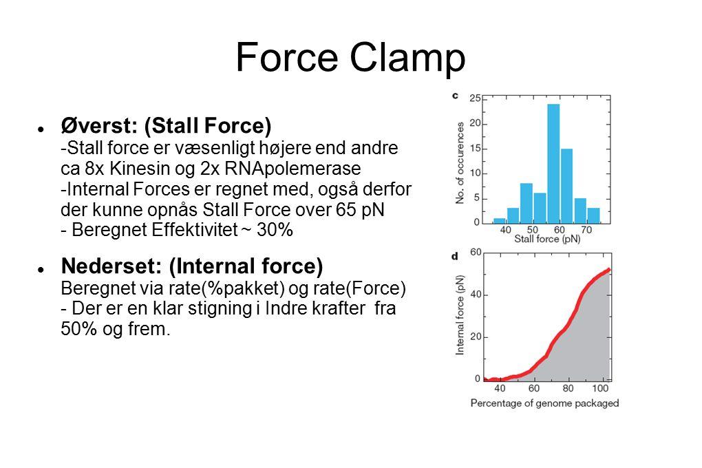 Force Clamp Øverst: (Stall Force) -Stall force er væsenligt højere end andre ca 8x Kinesin og 2x RNApolemerase -Internal Forces er regnet med, også derfor der kunne opnås Stall Force over 65 pN - Beregnet Effektivitet ~ 30% Nederset: (Internal force) Beregnet via rate(%pakket) og rate(Force) - Der er en klar stigning i Indre krafter fra 50% og frem.