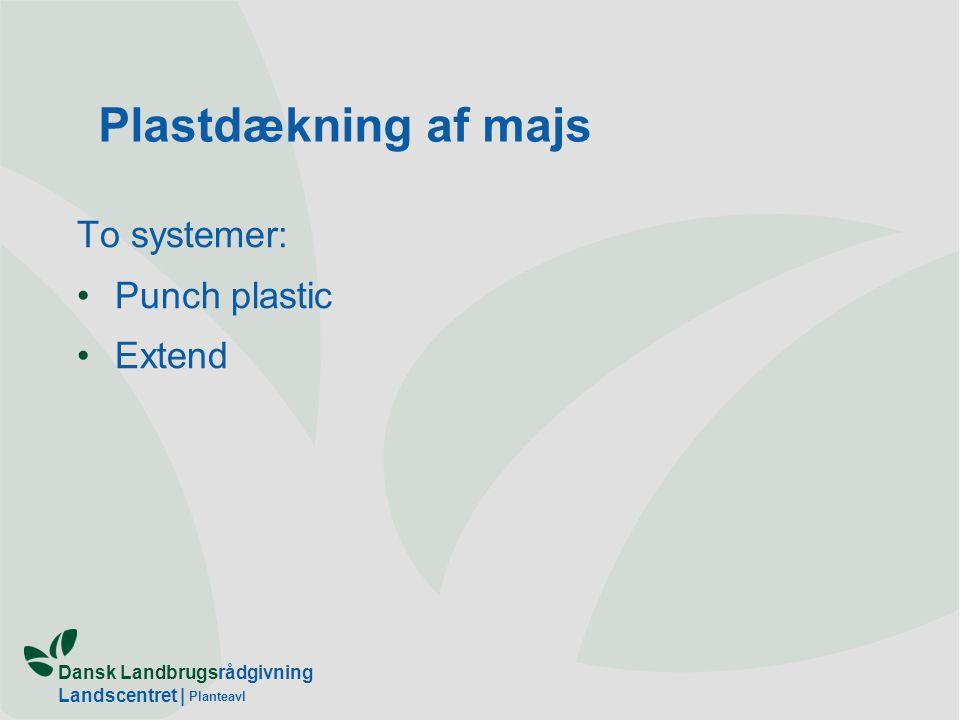 Dansk Landbrugsrådgivning Landscentret | Planteavl Plastdækning af majs To systemer: Punch plastic Extend