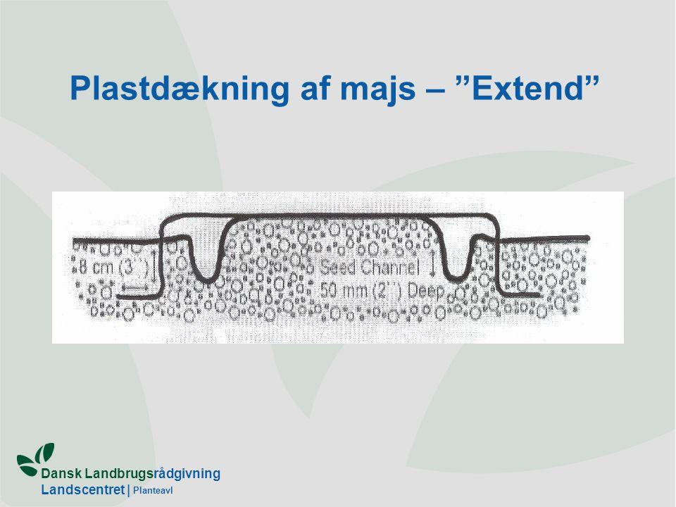 Dansk Landbrugsrådgivning Landscentret | Planteavl Plastdækning af majs – Extend