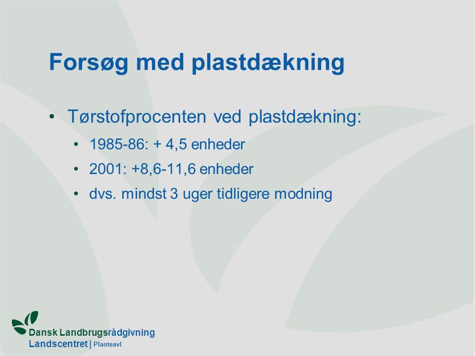 Dansk Landbrugsrådgivning Landscentret | Planteavl Forsøg med plastdækning Tørstofprocenten ved plastdækning: 1985-86: + 4,5 enheder 2001: +8,6-11,6 enheder dvs.